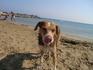 Еще собака с мунициального пляжа