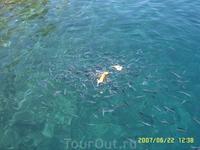 Голодные рыбки.