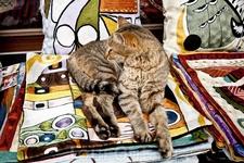 Котик в сувенирной лавке