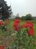 Следующая остановка на Воробьевых горах. Смотровая площадка с панорамными видами города. И не остается без внимания туристов центральное здание университетского ...