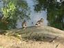Александровский парк, утки