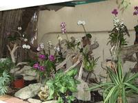 Пуэрто де ля Крус. Парк орхидей