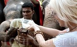 Кормёжка слоняры