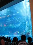 Огромный аквариум в Dubai Mall