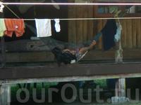 дева с младенцем в гамаке