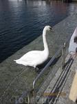 На набережной Ставангера
