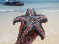 морская звезда (вид снизу)