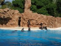 Лоро Парк. Шоу дельфинов