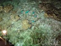 бирюзовые рыбки