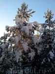 морозное  солнце зимней Карелии. 29.12.2011