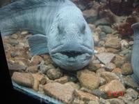 Луфутунский аквариум в Кабельвоге