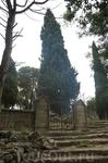 кипарисы на Фелеримском холме