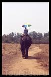 Езда на слонах