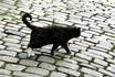 Черный кот, но с белыми лапками