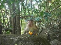 обезьянка)