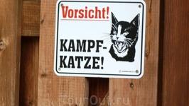 Осторожно - во дворе злая кошка!