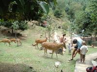 олени в парадайз парке