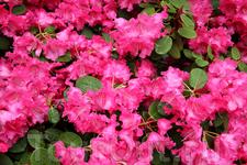 цветы в Бергене