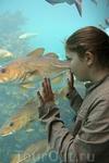 Главный обитатель аквариума - треска.