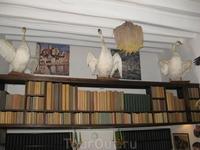 Библиотека и чучела лебедей, которые когда-то плавали в заливе.