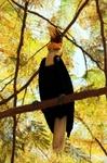 Тукан в сафари-парке