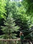 В лесах Баварии