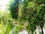 Дворец Бахия снаружи, скрыт зарослями апельсиновых деревьев...