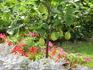Субтропический климат этой местности благоприятен для южной растительности.