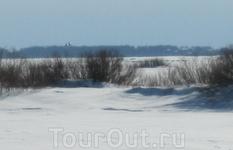 На первом плане - р. Шелонь, далее за кустами (где, якобы, поле) - озеро Ильмень. Где лес - знаменитый Ильменский глинт и купола Успенской церкви в д. ...