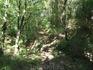 вот такой лес на горе