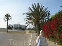 В Тунисе очень красивая природа.