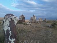 На камнях лишайники