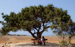 одинокое дерево на Каво Греко