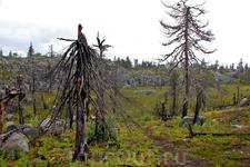 Ещё несколько фотографий уродливых, но красивых деревьев...