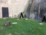 Один из аттракционов в замке - можно сфотографироваться с хищной птицей.