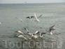 Чайки кушают на море