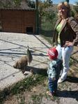 На страусовой ферме помимо самих страусов полно всякой домашней живности.Скромная павлиниха со своими птенцами, а я со своим)))