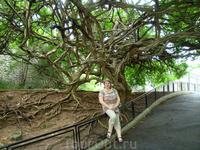Такие вот необычные деревья произрастают в зоопарке