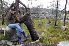 А в этом дереве явно просматривается нечто человеческое, как оно красиво сидит на камне!