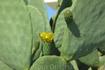 цветет все, даже кактусы