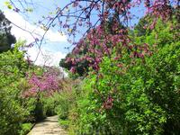 Парк очень старый, он был построен герцогиней Осуна между 1787 и 1839 гг. и раскинулся на площади в 14 га. Это единственный сад в стиле романтизма, существующий в Мадриде сегодня. В нем есть много уча