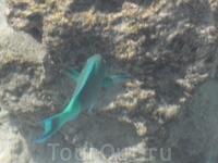 рыбки плавают уже в метре от входа в море!!!!