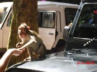 На пути к водопаду. Забавные обезьянки