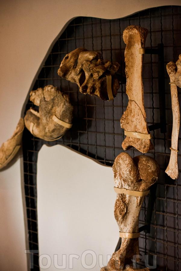 Музей карликовых слонов на о. Тилос  На острове обитали карликовые слоны, взрослая особь была размером не больше современного детеныша слона.