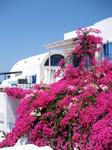 Там очень много вот таких розовых цветов! на фоне белого и синего они смотрятся потрясающе!