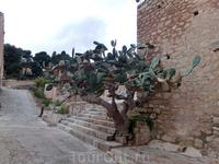 Огромный кактус тоже напоминает защитника крепости, притаившегося за углом на пути к равелину.