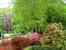 В это время в саду цветут не только тюльпаны, но и рододендроны. Очень красиво.
