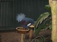 Экзотические птички находятся в закрытом вольере с высокой влажностью, бегают под ногами у туристов, или спокойно сидят на веточках. Как эта...