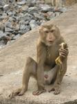 Местный страж,кинули ему банан,он подбежал и хотел отнять сумку.