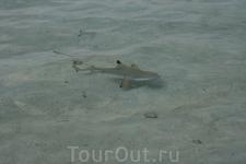 Акулка, вид с лежака